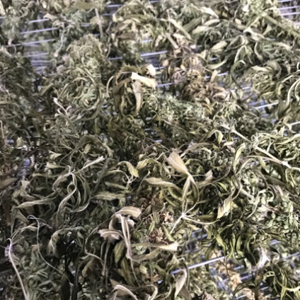 Hemp leaf tea is a fragrant and thirst quenching wellbeing infusion. It naturally contains CBD (cannabidiol) which gives the drink soothing and calming qualities.